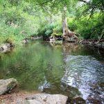 Schlücht-patak (magas-Feketeerdő)