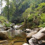 Wehra-folyó (magas-Feketeerdő)
